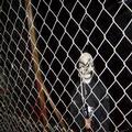 Fencing Skulls