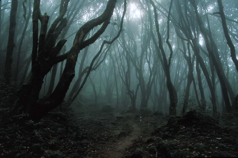 over 100 years have passed since the disappearance of jacob and every fall the strange noises return from somewhere in the woods in all these years