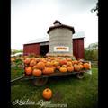 Axdahl's Garden Farm and Pumpkin Patch
